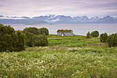 Meadow with wooden house on the East coast of the isle, Hadseloy, Vesteralen, Province of Nordland, Nordland, Norway, Europe