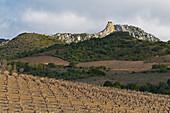 Blick über Weinanbaugebiet auf Château de Quéribus, Katharerburg, Corbières, Dept. Pyrénées-Orientales, Languedoc-Roussillon, Frankreich, Europa