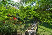 Path in the garden, Beauties of Nature, small lodge near Yala National Park, Kirinda in the South of Sri Lanka
