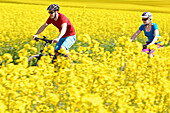 Two cyclists with electric bicycles between blooming canola fields, Tanna, Thuringia, Germany