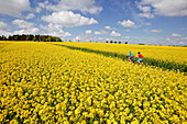 Two cyclists riding electric bicycles between blooming canola fields, Tanna, Thuringia, Germany