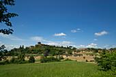 Field at the foot of the Vinery Palazzo Massani, near San Quirico d'Orcia, Toskana, Italy, Europe