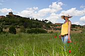 Poppies in a field at the foot of the Vinery Palazzo Massani, near San Quirico d'Orcia, Toskana, Italy, Europe