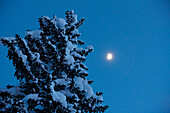 Snow-covered fir tree at night in the moonlight, Winter, Mountains, Nature