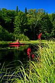 Kayaker in red boat on Big Brook, Adirondack Park, NY, USA, with focus on grasses Long Lakeq, NY, USA