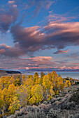 Fall yellow aspen trees with sunset clouds above Mono Lake in California, ca, usa