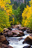 The west fork of the Carson River is alive with fall color outside of Markleeville, CA Markleeville, California, USA