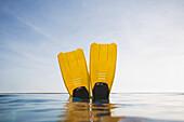 POV swim fins St. John, Virgin Islands, United States
