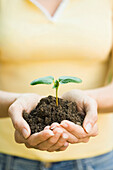 Hispanic woman holding seedling, California