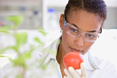 African scientist performing analysis in laboratory on tomato, Cape Town, South Africa