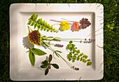 Mountain laurel, coleus, Queen Kimberly fern, lavender, ajuga and boston fern on platter, Richmond, Virginia, United States
