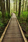 Boardwalk across wetland, Issaquah, Washington, USA