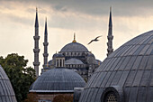 Domes and towers of Blue Mosque, Istanbul, Turkey, Istanbul, Turkey, Turkey