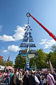 1st may, putting up the maypole, Viktualienmarkt, Munich, Upper Bavaria, Bavaria, Germany