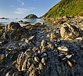 Muscheln, Wainui Bay, Abel Tasman Nationalpark, Tasman, Südinsel, Neuseeland