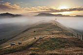 Morging light over meadow, Wharariki, Tasman, South Island, New Zealand
