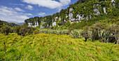 Bullock Creek, Paparoa National Park, West Coast, South Island, New Zealand