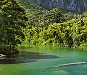 Pororari River, Paparoa National park, West Coast, South Island, New Zealand