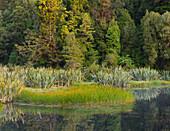 Lake Matheson, West Coast, South Island, New Zealand