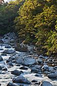 Hollyford River, Fiordland National Park, Southland, South Island, New Zealand