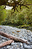Cleddau River with driftwood, Fiordland National Park, Southland, South Island, New Zealand