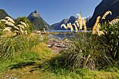 Milford Sound, Fiordland National Park, Southland, South Island, New Zealand