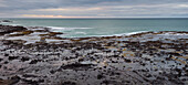 Petrified Forest, Curio Bay, Catlins, Southland, South Island, New Zealand