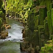 Whaiti-Nui-A-Toi Canyon, Whirinaki Forest Park, Bay of Plenty, North Island, New Zealand