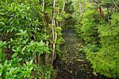 Woodland, Auckland Sentennial Park, Piha, North Island, New Zealand