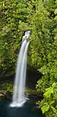 Omanawa Falls, Bay of Plenty, North Island, New Zealand