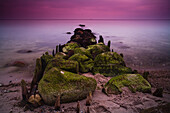 Groynes and moss covered stones in the morning light, Buelk, Strande, Kiel Fjord, Schleswig-Holstein, Germany