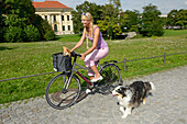 Female cyclist with Chihuahua in a basket and Border Collie, Munich, Bavaria, Germany