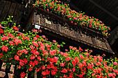 Geranium filled window boxes decorating a wooden house, Reit im Winkl, Chiemgau, Upper Bavaria, Germany