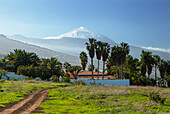 view from El Sauzal to Teide, 3718m, with snow, the island´s landmark, highest point in Spain, palm tree, volcanic mountain, Tenerife, Canary Islands, Spain, Europe