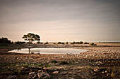 Long time exposure of waterhole with umbrella acacia (typical african tree), Etosha National Reserve, Namibia, Africa