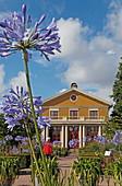 Agapanthus in Tradgardsforeningens Park, Botanical Garden, Gothenburg, Sweden