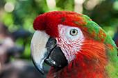 Parrot, Xel-Ha Water Park, Tulum, Riviera Maya, Quintana Roo, Mexico