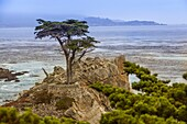 Pebble Beach Cypress Tree on the 17 mile scenic drive, is recognized as one of the most scenic drives in the world.
