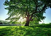 Tree in bright sunlight