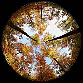 Fisheye view of forest in autumn