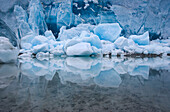 The amazing blue of glacial ice is reflected in the water, Glacier Bay, Alaska.