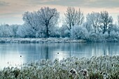 UK, England, Gloucestershire, Cotswold Water Park, winter flood.