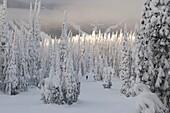 Canada, BC, Kamloops, Sun Peaks Resort. Ski slopes on the Mount Morrisey section of the Sun Peaks Resort.