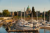 Canada, BC, Victoria. Yachts and pleasure boats moored in the inner harbour marina. The British Columbia parliament buildings in the background.