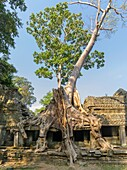 Preah Khan, sometimes transliterated as Prah Khan, is a temple at Angkor, Cambodia, built in the 12th century for King Jayavarman VII. It is located northeast of Angkor Thom and just west of the Jayatataka baray, with which it was associated. It was the c