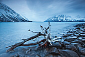 Log Along The Shores Of Kathleen Lake, Kluane National Park, Yukon.