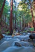 Stream In Limekiln State Park, California