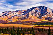 Fall Colours And Fang Mountain, Denali National Park, Alaska