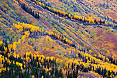 Artist's Choice: Fall Colours, Toad River, Northern British Columbia