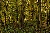 Cathedral Grove, British Columbia.